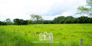 Caribbean Turnkey Mature Cattle Farm in Colon
